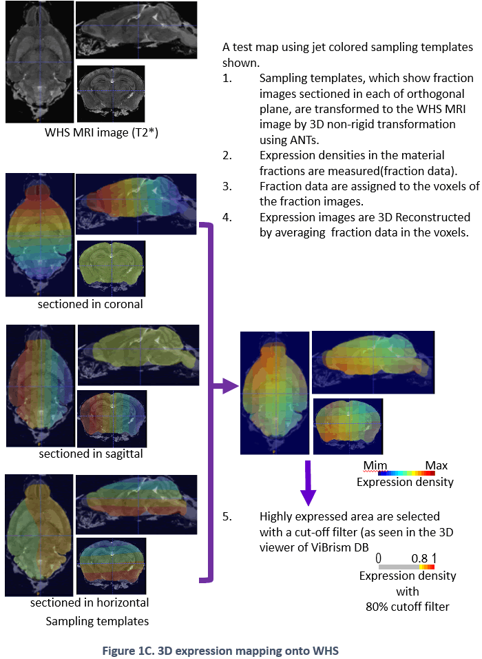 Figure 1C. 3D expression mapping onto WHS